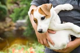 Remedii pentru paraziti intestinali (viermi) la caini